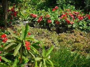 image-soa-garden
